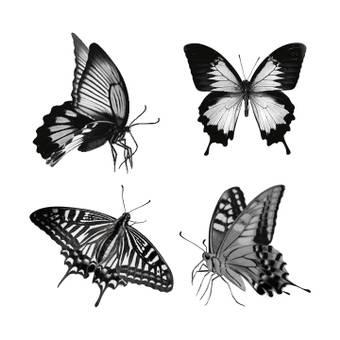 나비 브러쉬
